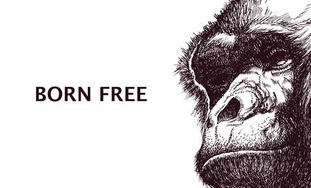 Head gorilla. Hand drawn.  Illustration