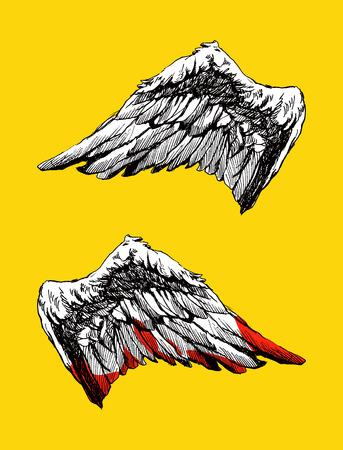 animal angelic: Hand drawn angel wings vector illustration