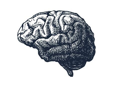 Human brain illustration.