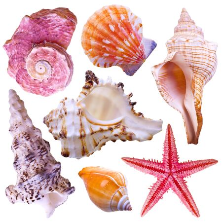 Collection of sea shells isolated on white photo