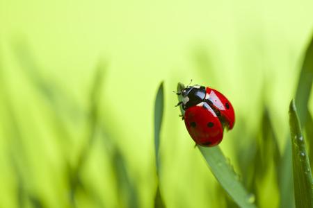Lieveheersbeestje op blad Stockfoto