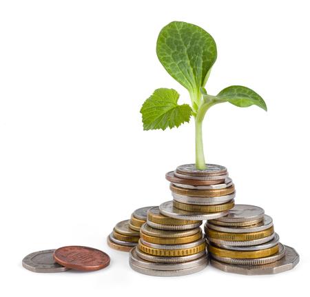 bonus: Money growth or ecology concept Stock Photo