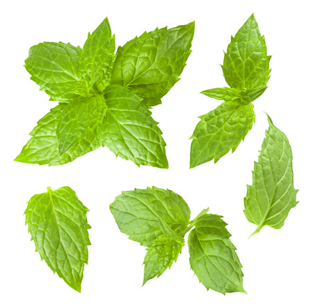 Collection of mint leaves isolated on white background