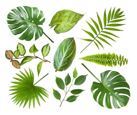 Collage di diverse foglie di piante esotiche isolate su bianco