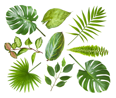 Collage of different exotic plant leaves isolated on white