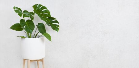 Flower pot with plant on grunge wall background with space 写真素材