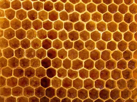 animal pattern: Honeycomb, honey macro close up