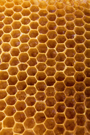 macro close up: Honeycomb, honey macro close up