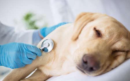 Vet specialist examination sick dog