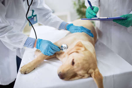 Vet dog healthcare, vet teamwork Stock Photo