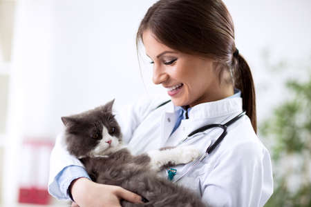 Vet with stethoscope and persian kitten