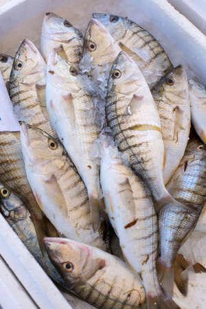 hooked up: Freshly hooked fish marine spar, close up Stock Photo