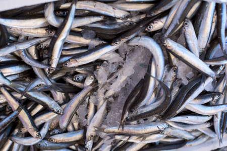 hooked up: Fresh sea fish hooked smelt, close up