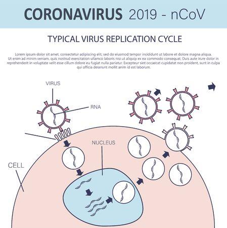 Typical virus replication cycle. Coronavirus 2019-nCoV infographic. Virus penetration into the cell. Vector illustration Vektoros illusztráció