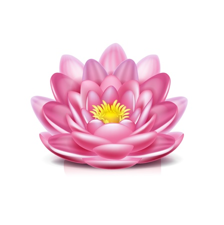 lotus flower isolated on white background Vector