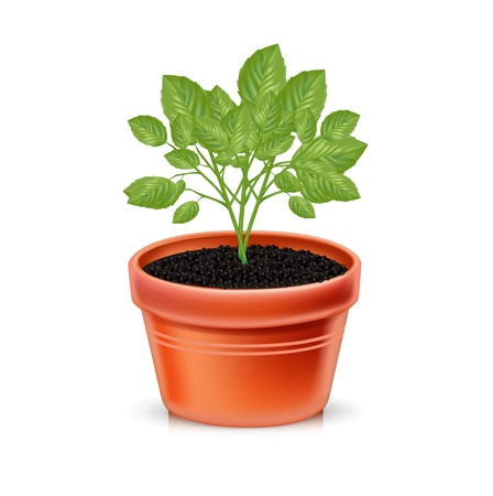 growing plant in clay pot isolated on white
