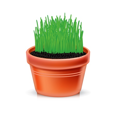 clay pot with growing grass isolated Stock Vector - 21684478