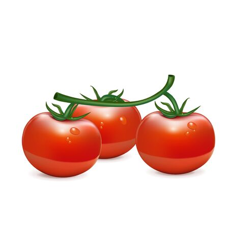 salat: bunch of three tomatoes isolated on white