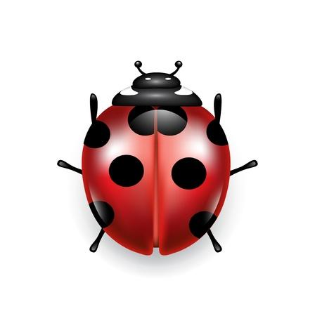 lady bug: Lady Bug auf wei�em Hintergrund Illustration