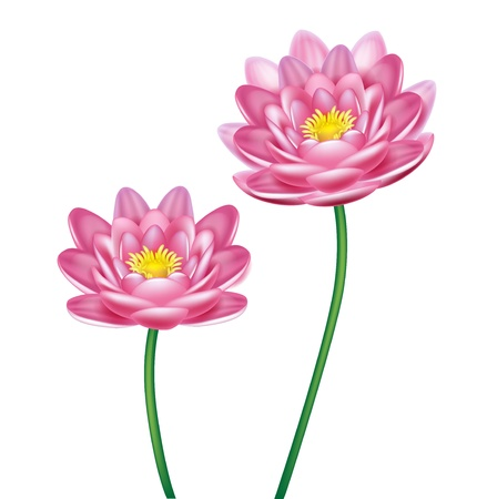 two lotus flowers isolated Vector