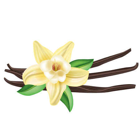 vanilla flower with sticks and leaves isolated on white Ilustração