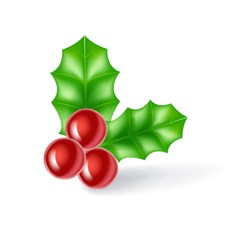 mistletoe leaves isolated on white background Vector