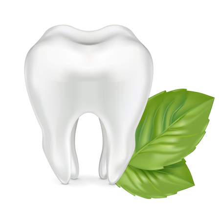shedding: tooth with leaves isolated on white background Illustration