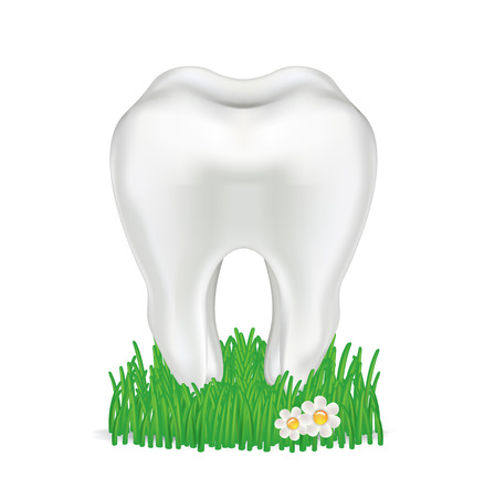tooth in grass isolated on white background