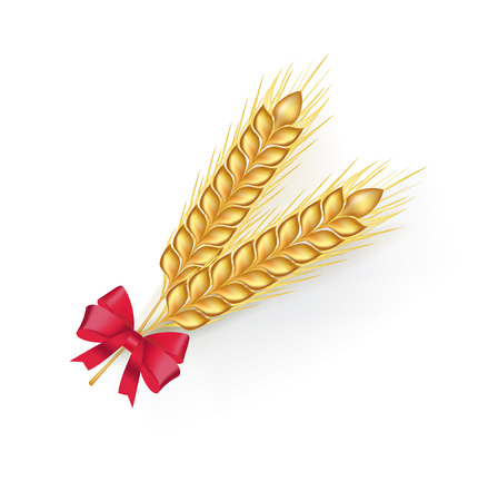 winter wheat: wheat grains with red ribbon isolated on white