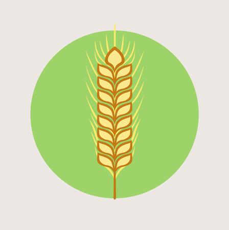 winter wheat: single grain vector flat design vector icon