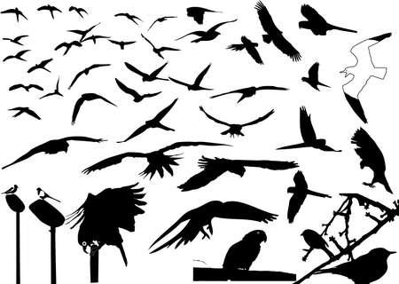 gaviota: aves silueta