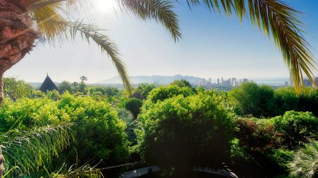 Panoramic view of tropical landscape in benidorm, spain