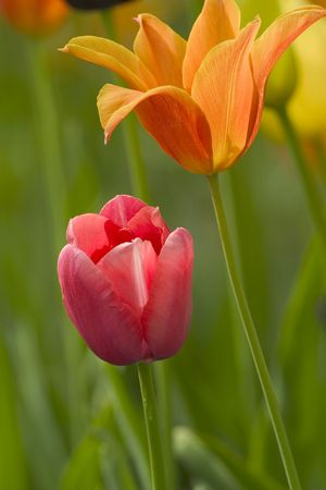 entrepreneurial: a couple of nice flowers against a green background