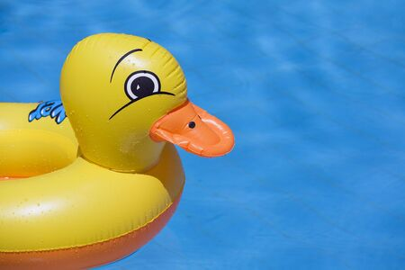 plastic duck floating in a swimming pool Stock Photo - 509973