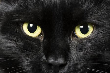 unfortunate: domestic animals: close-up of cat eyes
