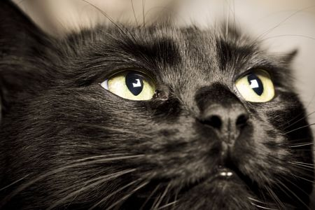 domestic animals: close-up of cat eyes photo