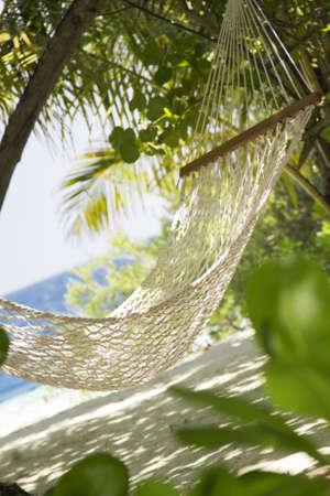 passtime: tropical beach: hammock in a garden near the sea
