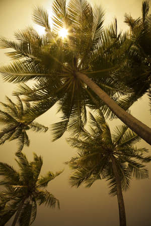 to get warm: tropical beach: sunbeams through some palm trees Stock Photo