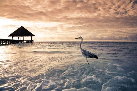 seabird: tropical beach: flamingo at the dawn. Dramatic sky