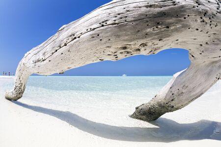trunk  tree: playa tropical: tronco del �rbol la izquierda en la arena. Algunas personas de la izquierda