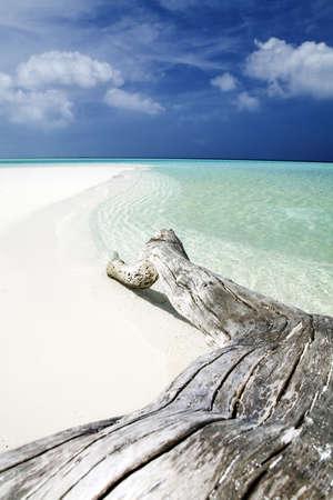 tropical beach: tree trunk left on the sand. photo
