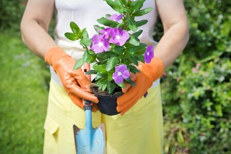 Cropped view of senior woman holding flower pot in garden photo