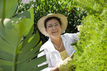 Portrait of senior Italian woman gardening, looking at camera photo