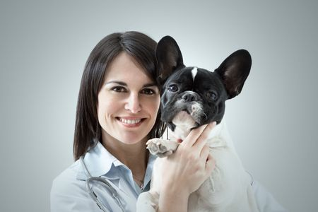 mid adult veterinarian holding french bulldog indoors Stock Photo - 4403247