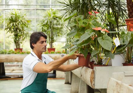 male florist arranging plants in flower shop Stock Photo - 5065828