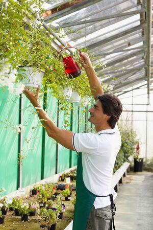 arroser plantes: m�le arrosage des plantes � fleurs fleuriste Banque d'images