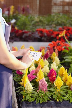cropped view of female florist writing price on tag photo