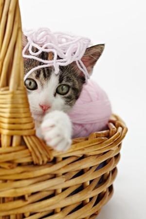 tricolor female kitten playing with ball of whool on pink background. Vertical shape, copy space photo