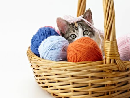 tricolor female kitten playing with ball of whool on pink background. Horizontal shape, copy space photo