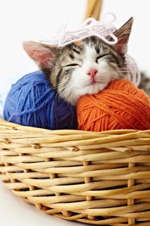 cats: tricolore cucciolo femmina dormire su palla di whool su sfondo bianco. Forma verticale